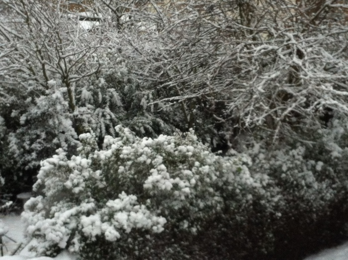 more snow 1