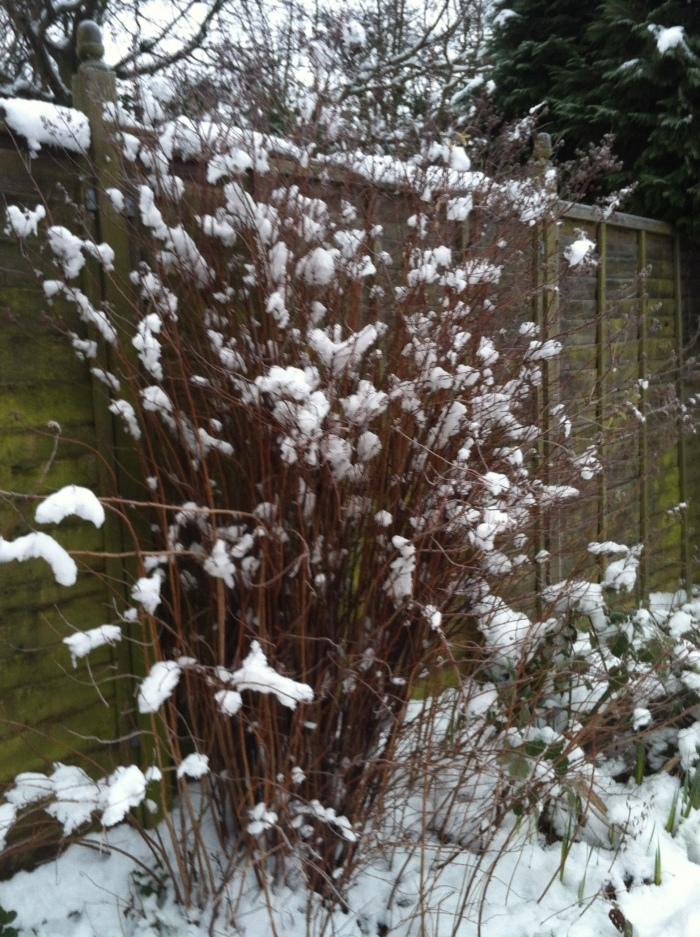 more snow 7