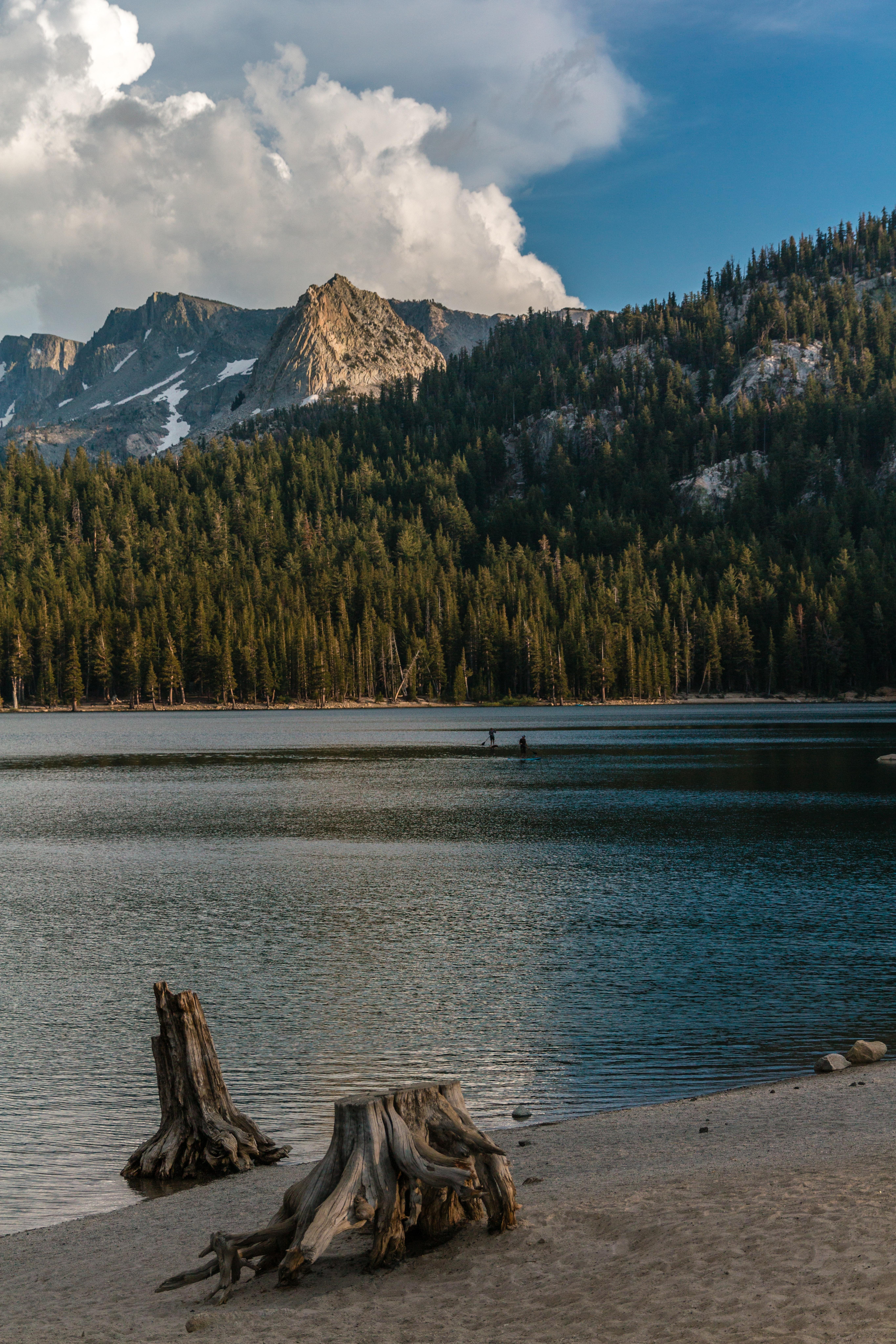 autumn-california-conifer-2900784